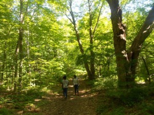Healthy Hiking is just one of the dozens of course offerings at NECC's STEM College for Kids at Quarrybrook summer program.