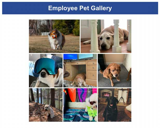 Employee pet gallery collage of 8 dogs at home. Two outside; by a river, and playing ball in a yard. 6 inside; under a desk, by a fireplace, by the stairs, in a corner, and two dressed up (one with ski mask).